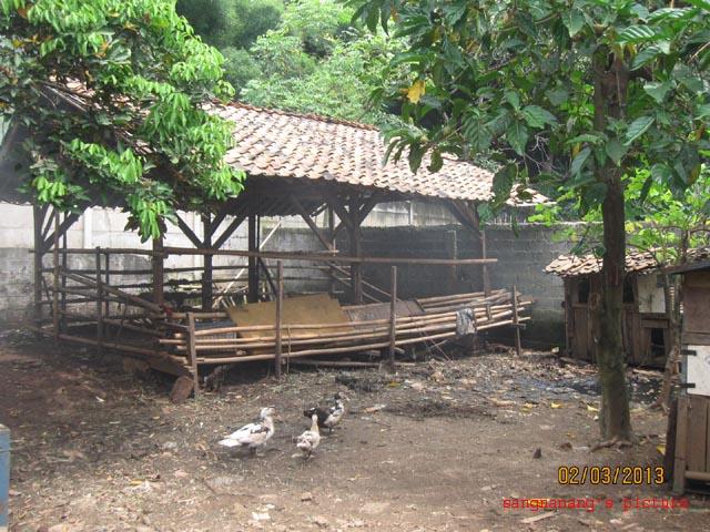 KandangSapi