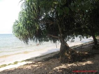 pantai-kasuari1