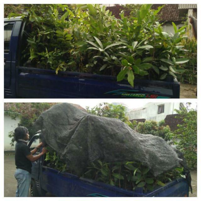menanam-pohon1