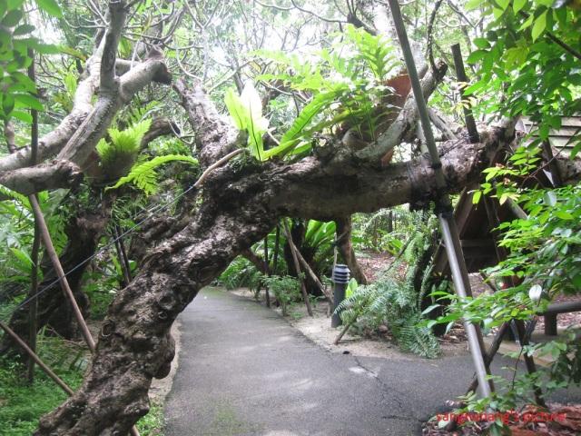 jacob-ballas-children-garden5